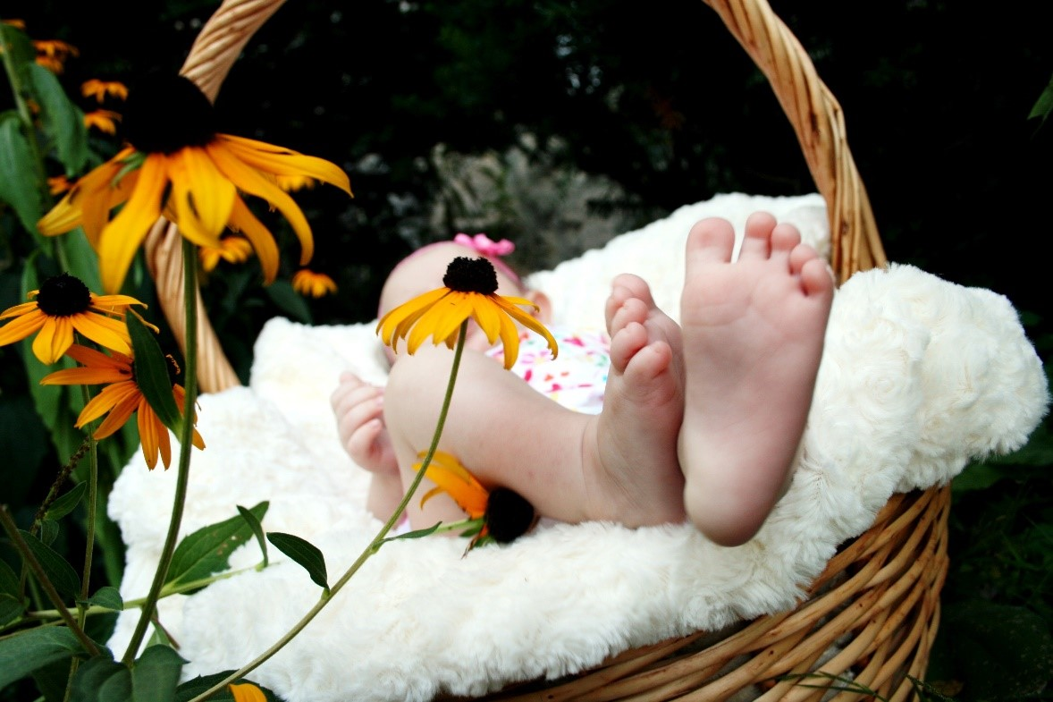 Photo of baby in basket
