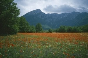 Colour photograph of a green meadow full of red poppies with the Abruzzo mountains rising behind.